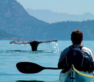 Whale Watch_Kayak